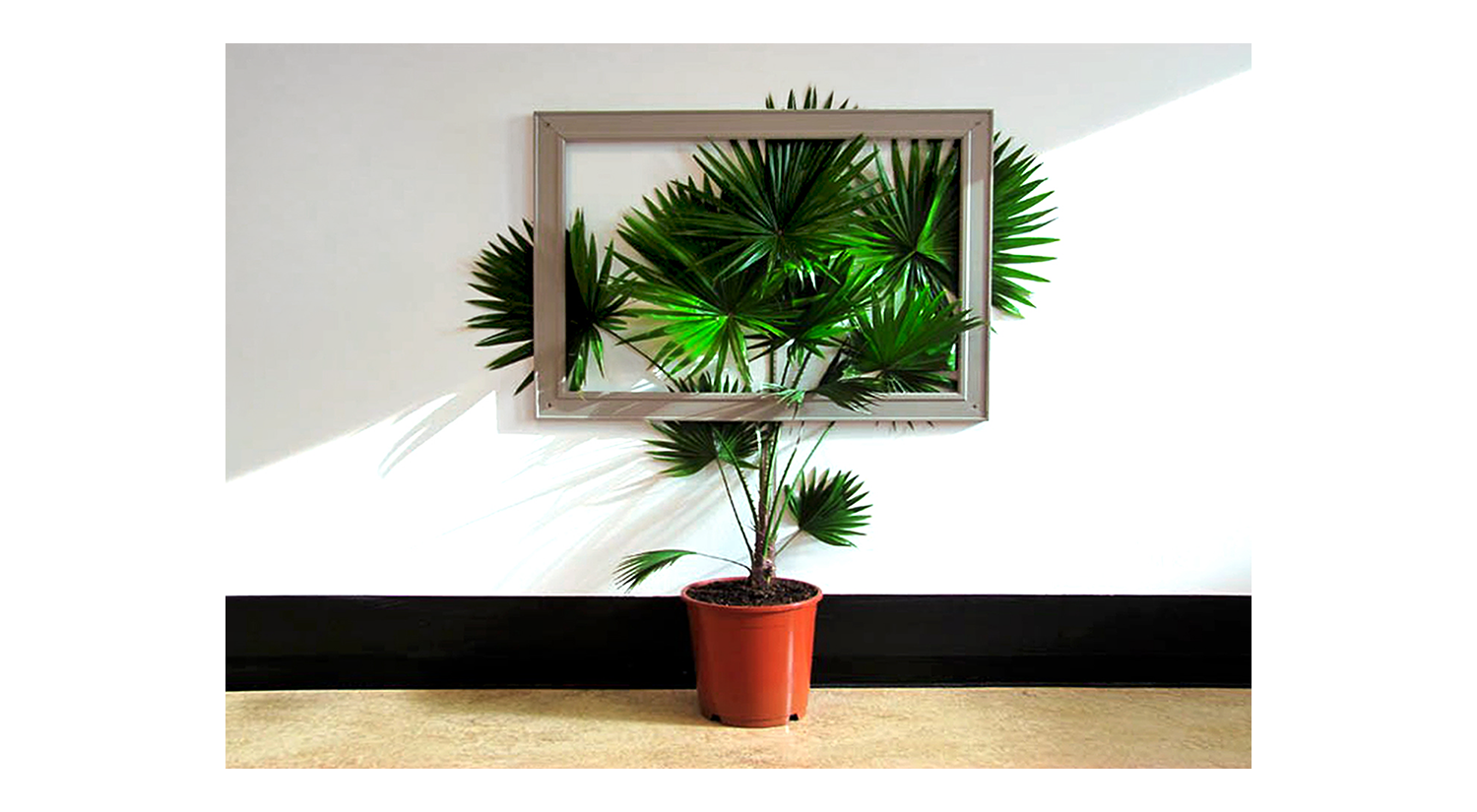 How to Be With Plants?